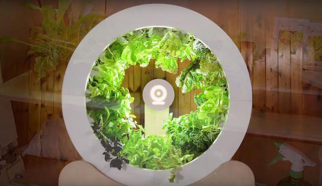 Inovatívna záhrada dokáže hotové zázraky!   Inovujme.sk